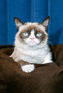 Grumpy cat imdb grumpy cat picture altavistaventures Choice Image