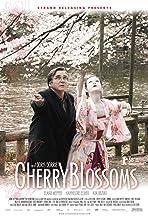Kirschblüten - Hanami