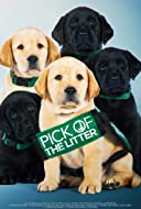Pick of the Litter 2018