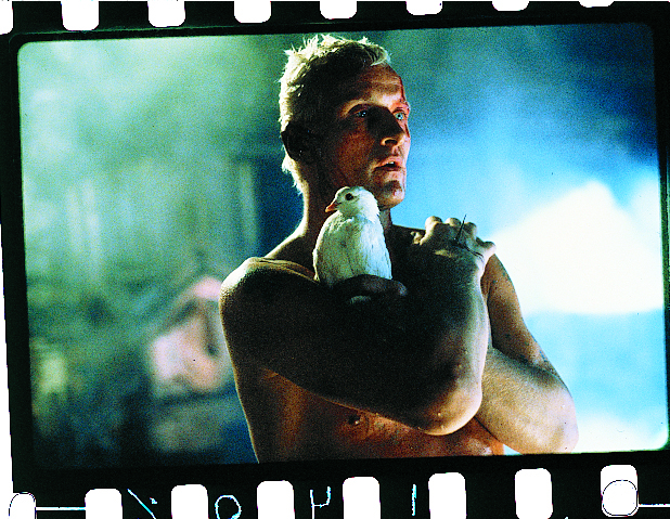 Pictures & Photos From Blade Runner (1982)