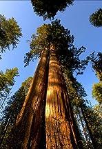 Cedar Sequoia International