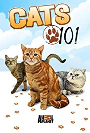 Cats 101 Poster - TV Show Forum, Cast, Reviews