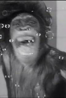 Bingo the Chimp Picture
