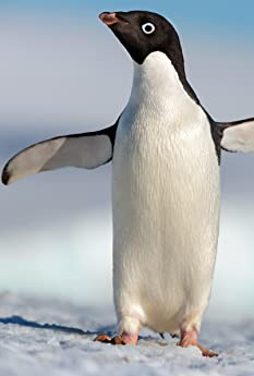 A coming-of-age story about an Adélie penguin named Steve who joins millions of fellow males in the icy Antarctic spring on a quest to build a suitable nest, find a life partner and start a family. None of it comes easily for him, especially considering he's targeted by everything from killer whales to leopard seals, who unapologetically threaten his happily ever after.