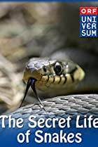 The Secret Life of Snakes Poster