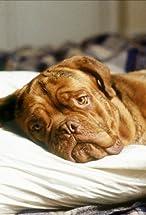 Beasley the Dog's primary photo