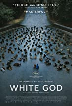 Primary image for White God