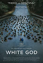 Fehér isten Poster