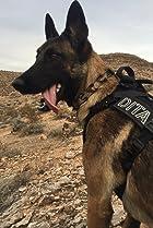 Dita The Hair Missile Dog