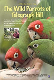 The Wild Parrots of Telegraph Hill(2003) Poster - Movie Forum, Cast, Reviews