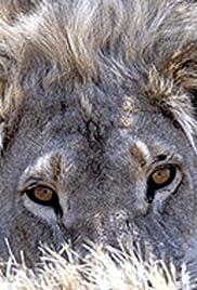Roar: Lions of the Kalahari Poster