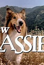 Primary image for The New Lassie