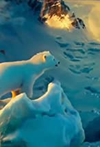 Primary image for The Polar Bears