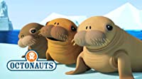 Octonauts and the Walrus Pups