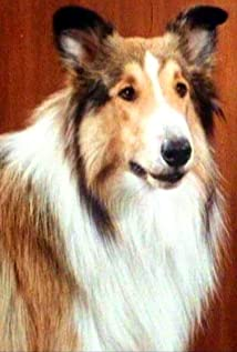 Lassie Picture