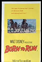Primary image for Born to Run
