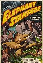 Elephant Stampede