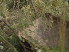 Killing Thyme Trailer